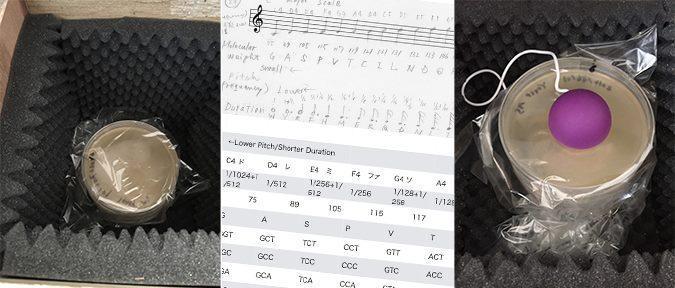 BioClub Weekly:Mayumi Sakai: Music and Yeast / 音楽と酵母